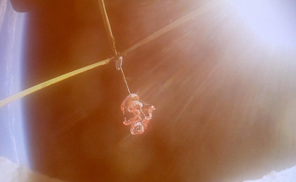 parachute ldsd 1a